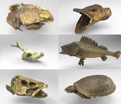 3D модели для студентов-ветеринаров